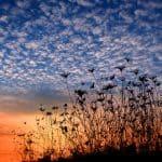 Devotional: Heavenly Minded