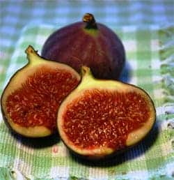 Figs - The Little Things In Life